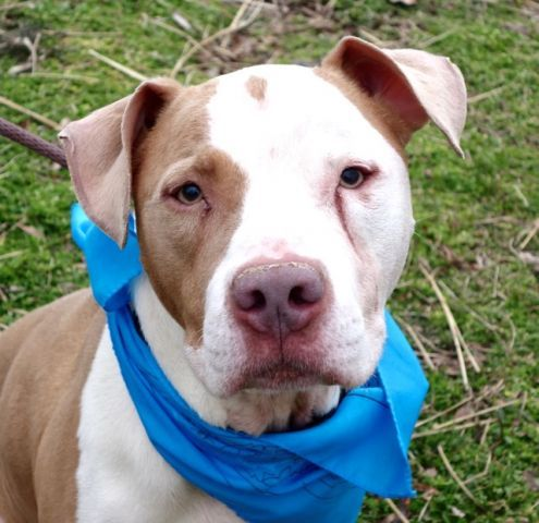 Luca A1106889 Manhattan To Be Destroyed 04 04 17 A Volunteer Writes I Call Him The Perfect Gentleman I Love His Name Dog Meet My Animal Animal Help
