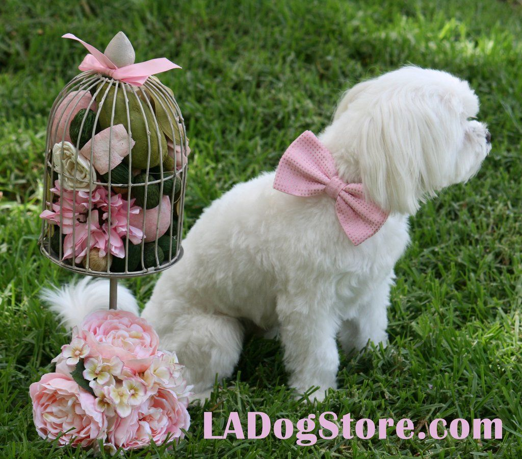 Top Collar Bow Adorable Dog - c0ce072c9990bd49a1cbb4a6d7f2add7  Snapshot_902624  .jpg