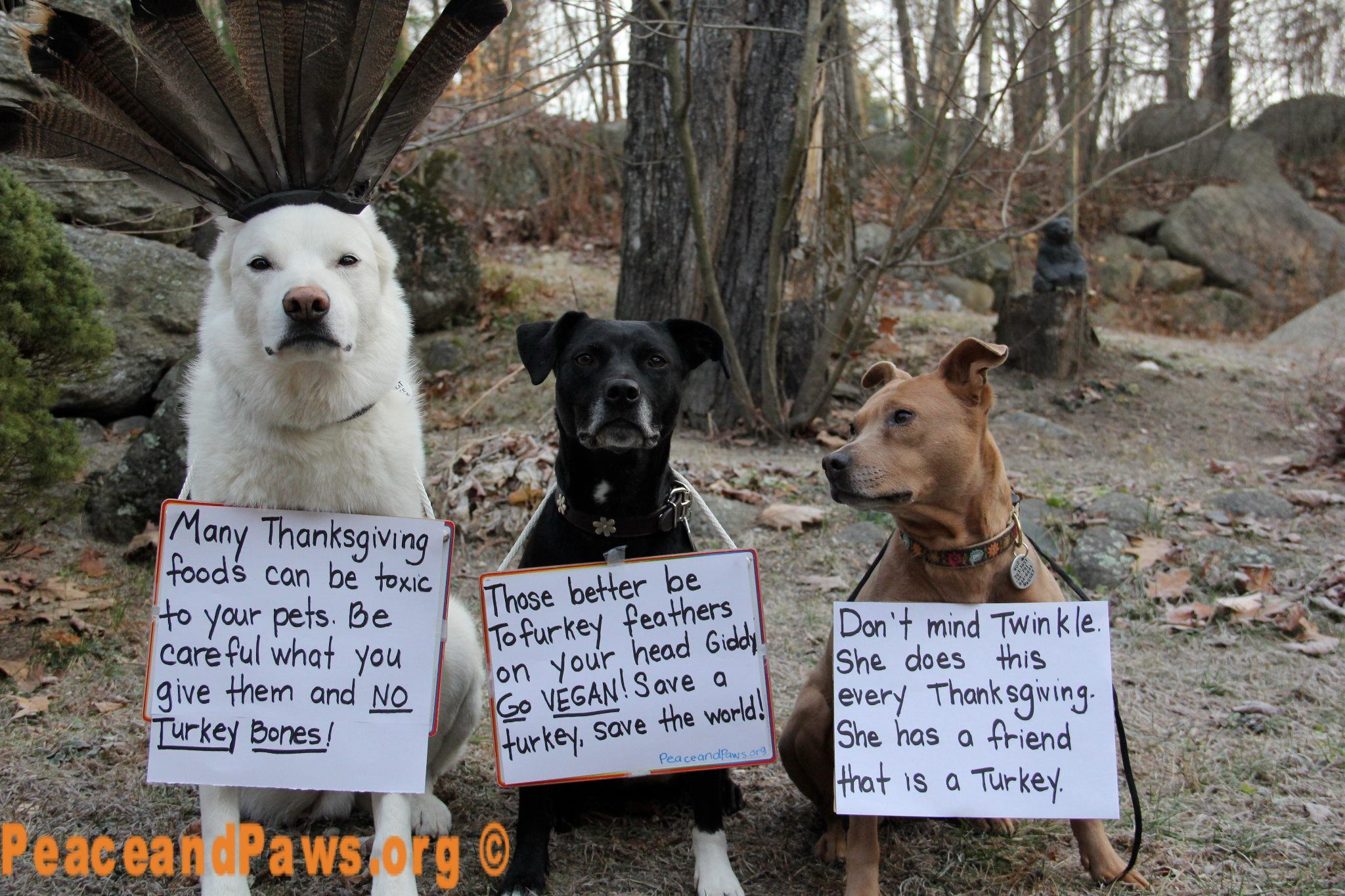 Thanksgiving tips from the local pet rescue Funny animal