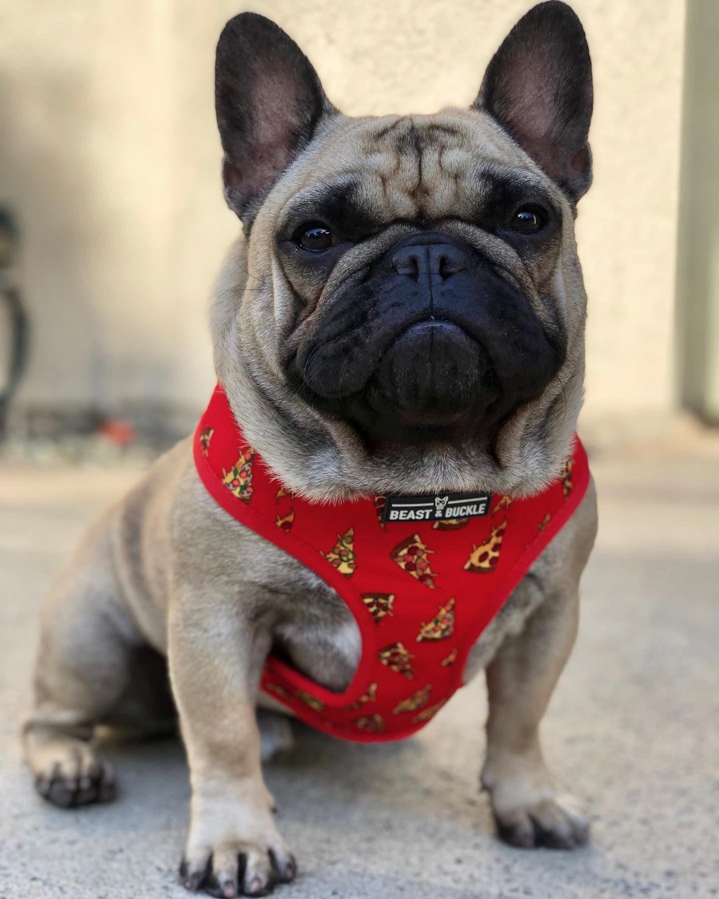 Pizza Harness and Leash Set French bulldog harness, Dog