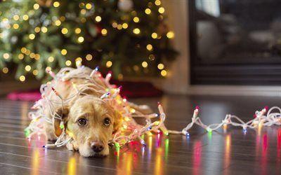 壁紙をダウンロードする ツリー, ガーランド, 犬, 新年