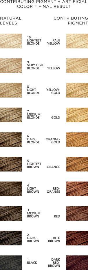 Contributing pigment chart hair color pinterest