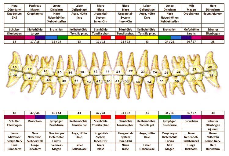 Zähne und Gesundheit - ausführliche Auflistung und Beschreibung der körperlichen/psychischen Bezüge – mein.yoga-vidya.de - Yoga Forum und Community