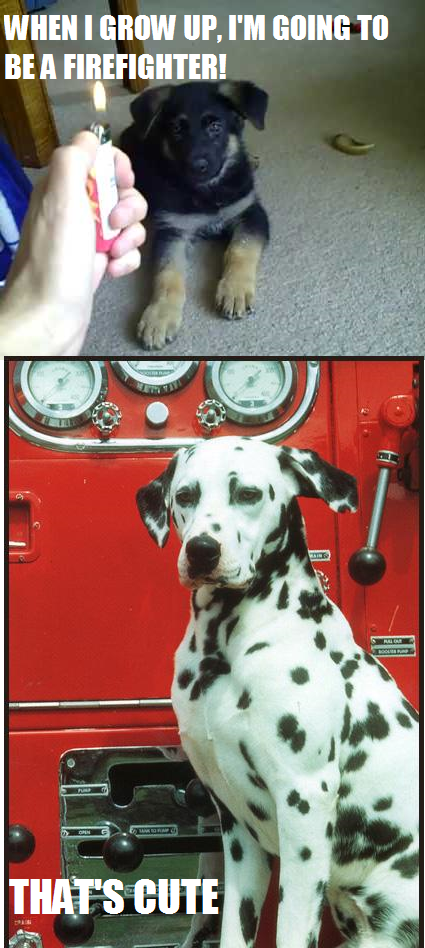 Firefighter Dog Meme My Memes Firefighter humor, Dog