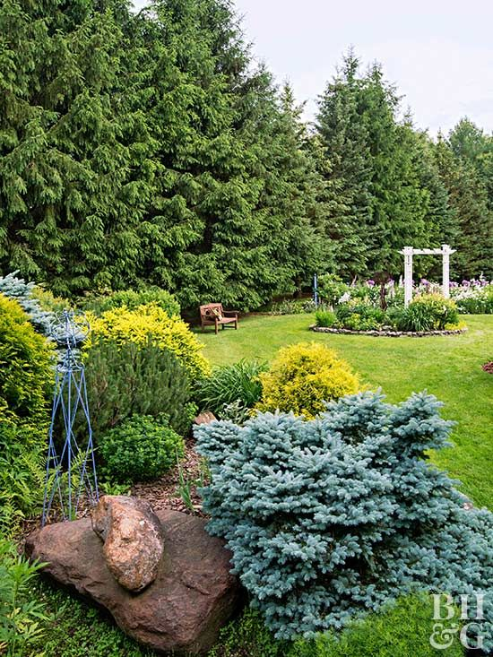 10 Best Evergreen Trees for Privacy and YearRound