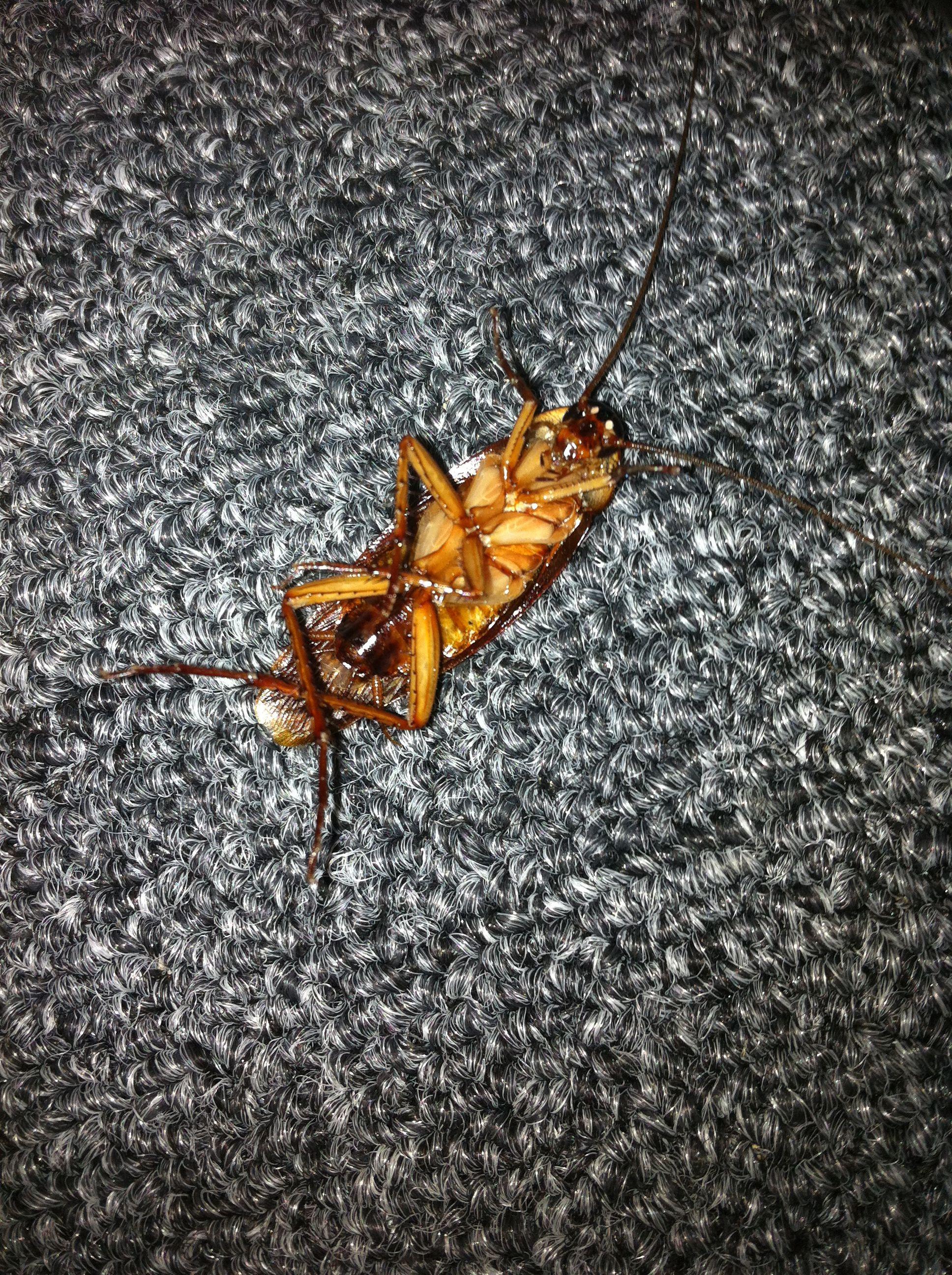 Roach found on 07/10/2013. Dead!