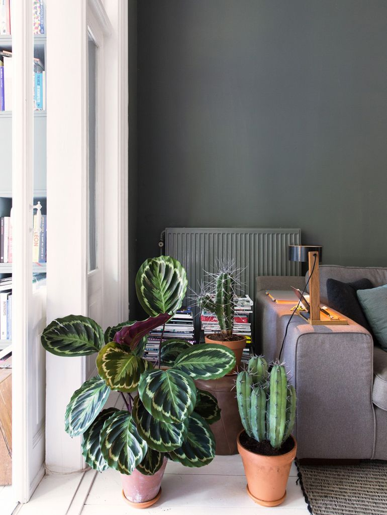 Le 12 piante da appartamento must-have secondo Pinterest ...