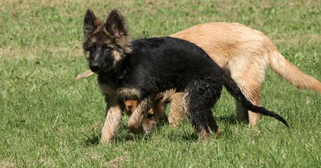 """""""Cuccioli, si fermano i traffici vietando la compravendita di animali"""""""
