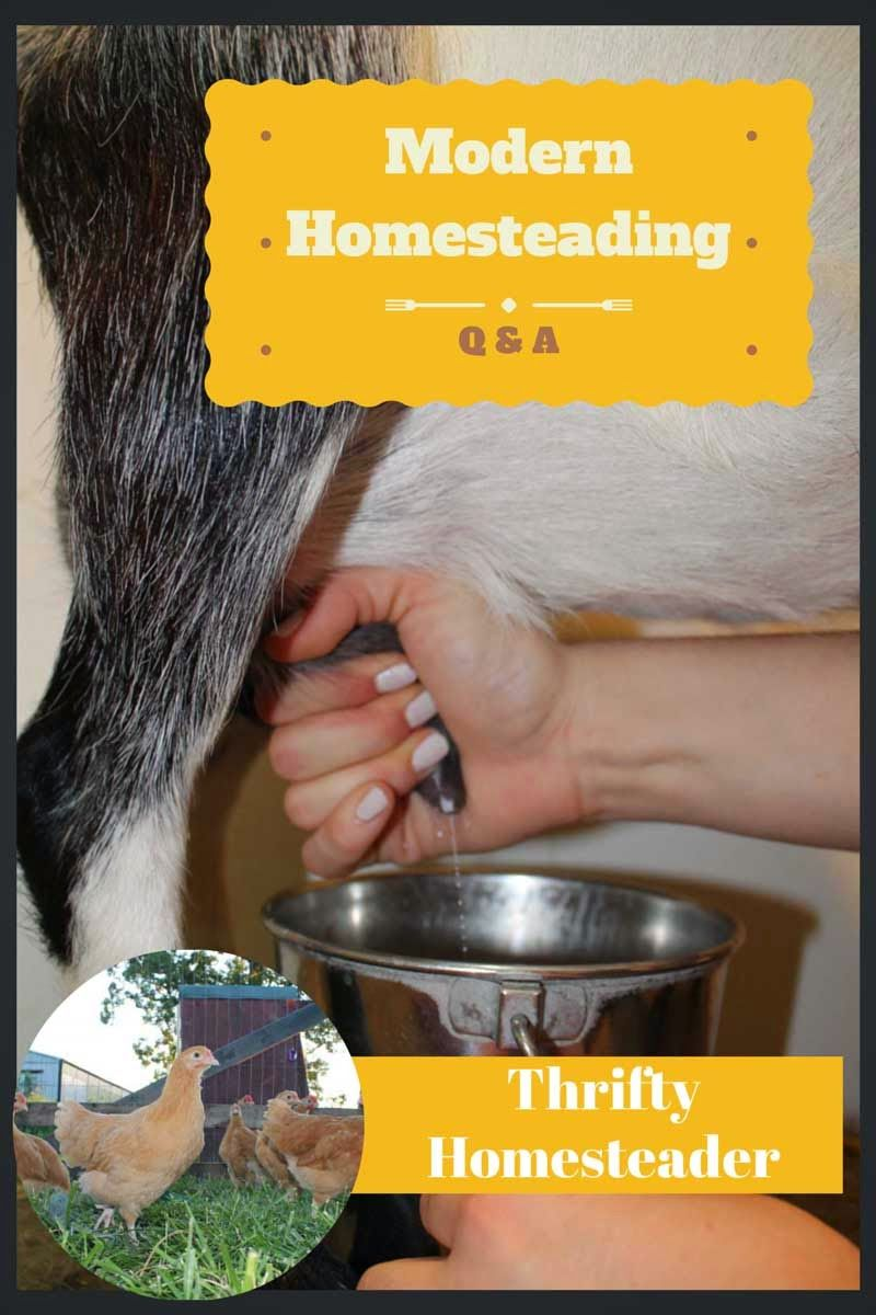 Answers to 7 questions about modern homesteading | Modern ...