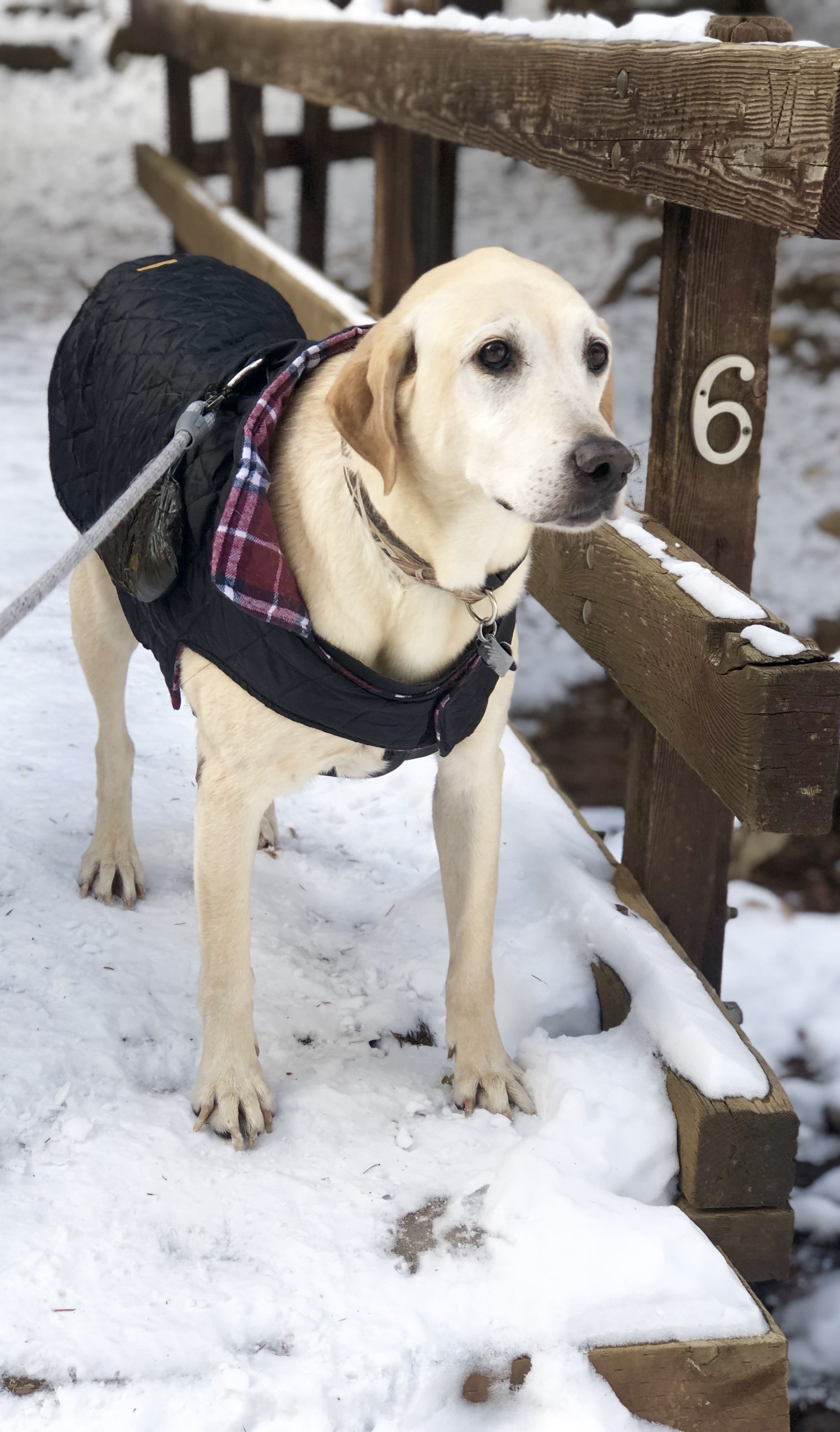 Bently bundled up on the trail to Helen Hunt Falls in