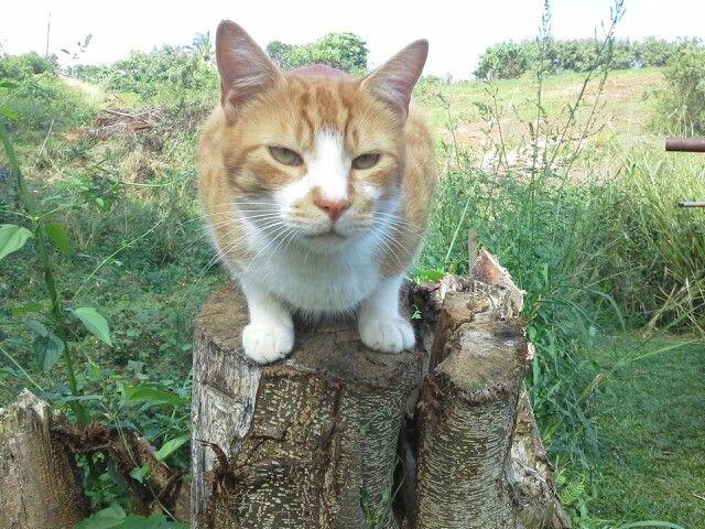 Cat in da garden