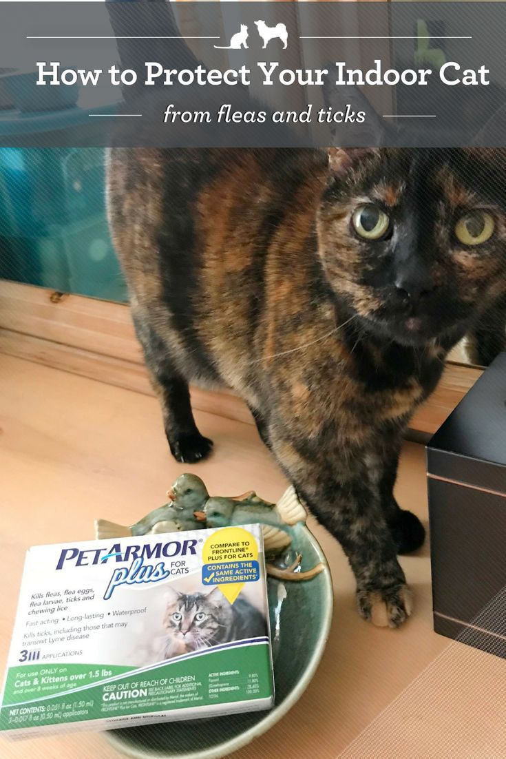 Sponsored Post How To Protect Your Cat From Fleas And Ticks Cat Fleas Cats Fleas