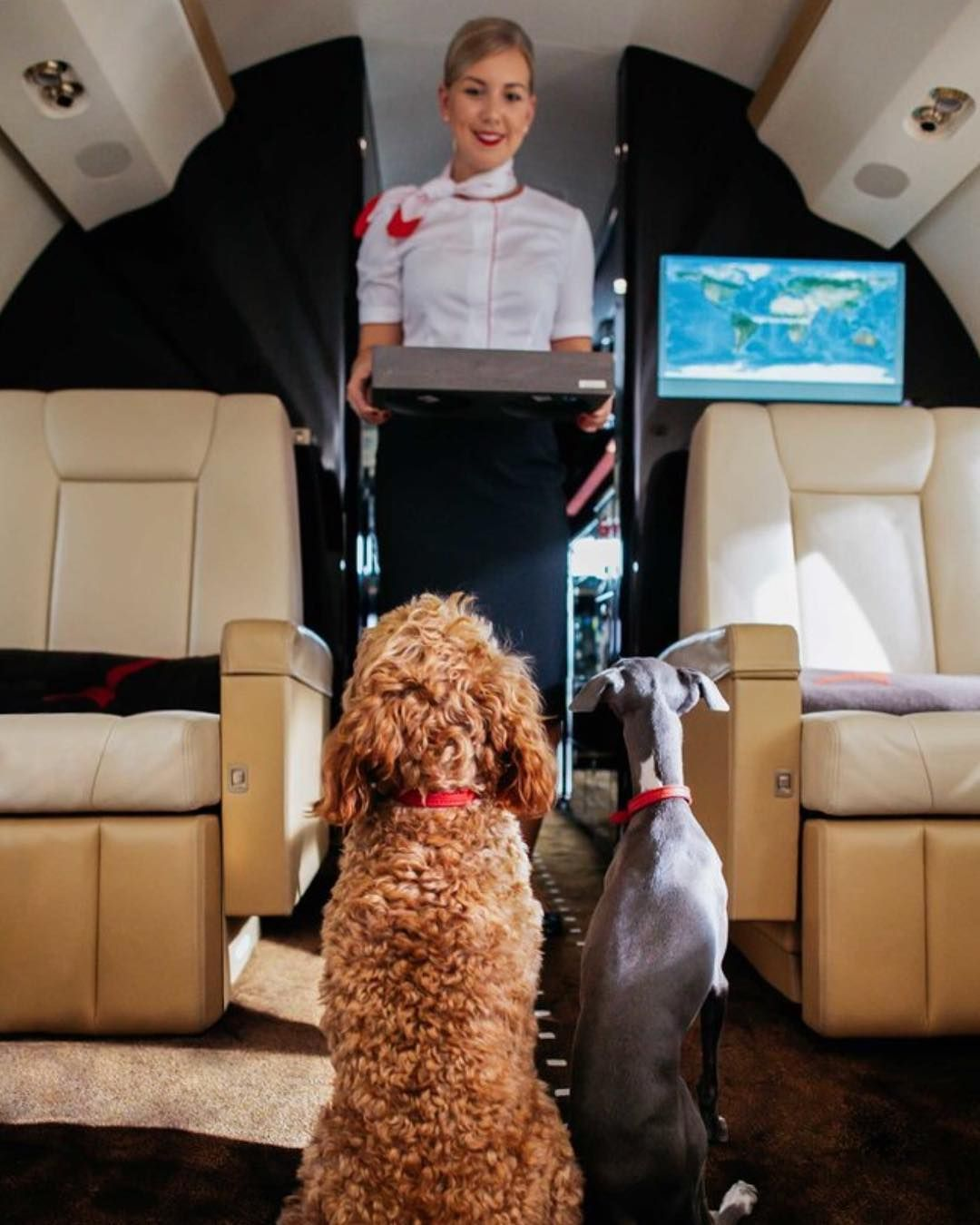 New The 10 Best Home Decor With Pictures Fly Fido To Italy According To Vistajet About 30 Million People Luxury Pet Pets Organic Pet Products