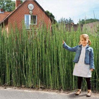 40+ Saeulen pflanzen als sichtschutz Sammlung