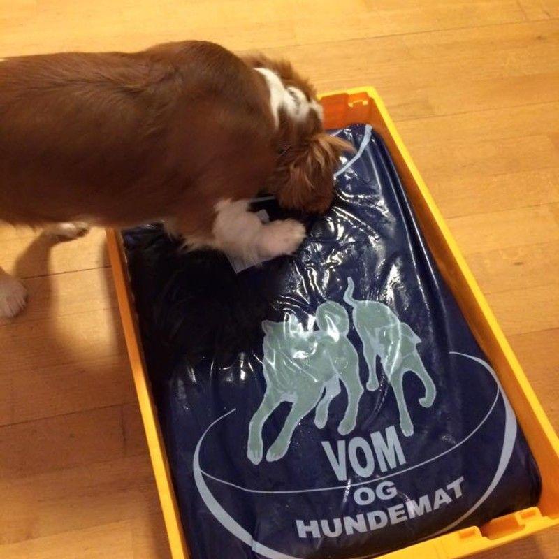 Do you think Bailey er meget klar for 20 kg med Vom & Hundemat ! deserves to win DELTA PÅ  VÅR BILDE/VIDEO KONKURRANSE! #vomoghundemat15? Have your say!