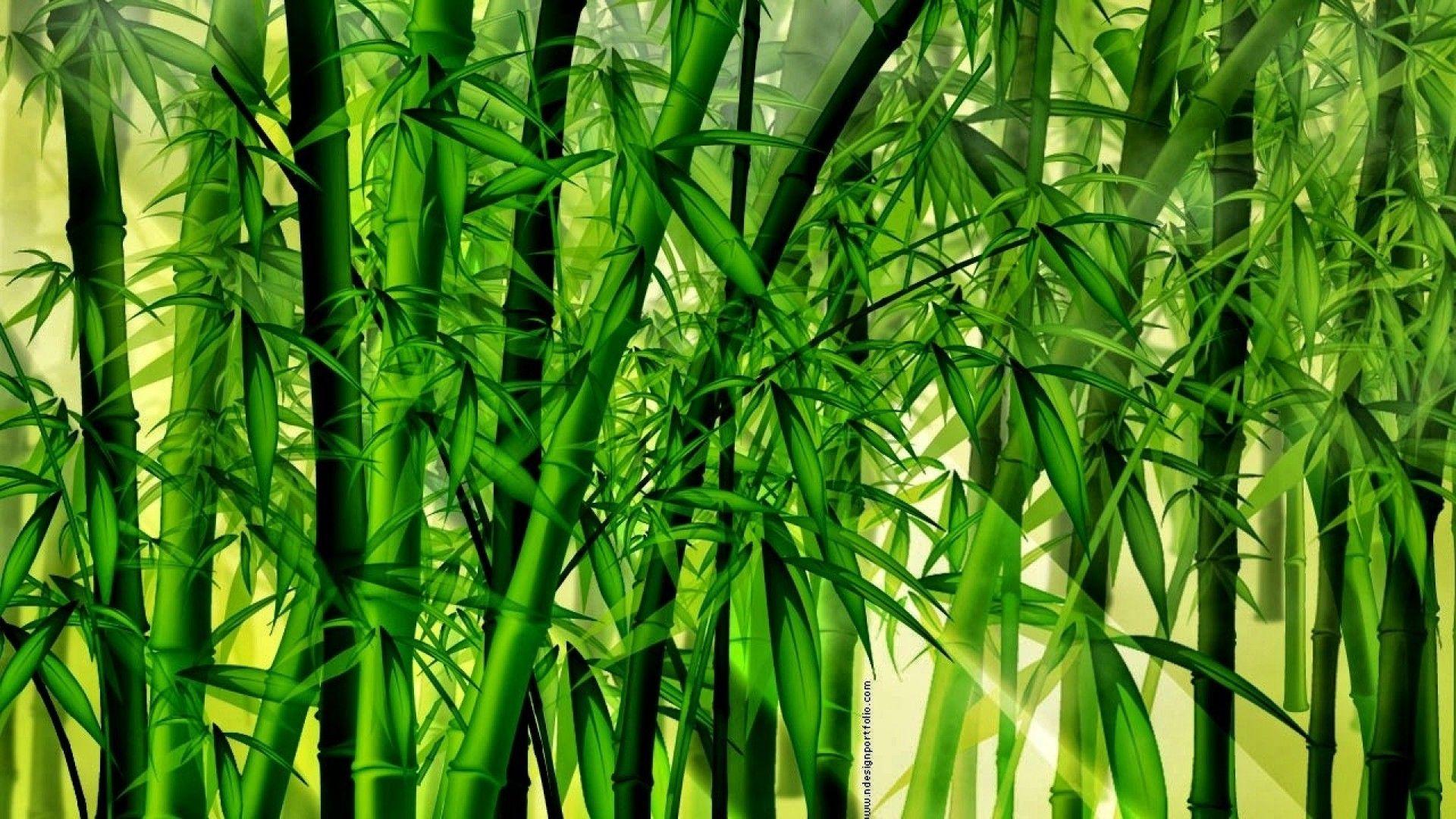 Bamboo Wallpaper - Buscar Con Google