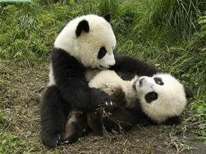 Resultados de la búsqueda de imágenes: osos - Yahoo Search