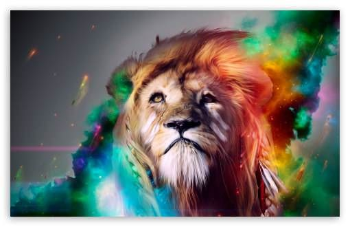 Beautiful Lion Hd Wallpaper For Desktop 1366x768 Via Classy Bro