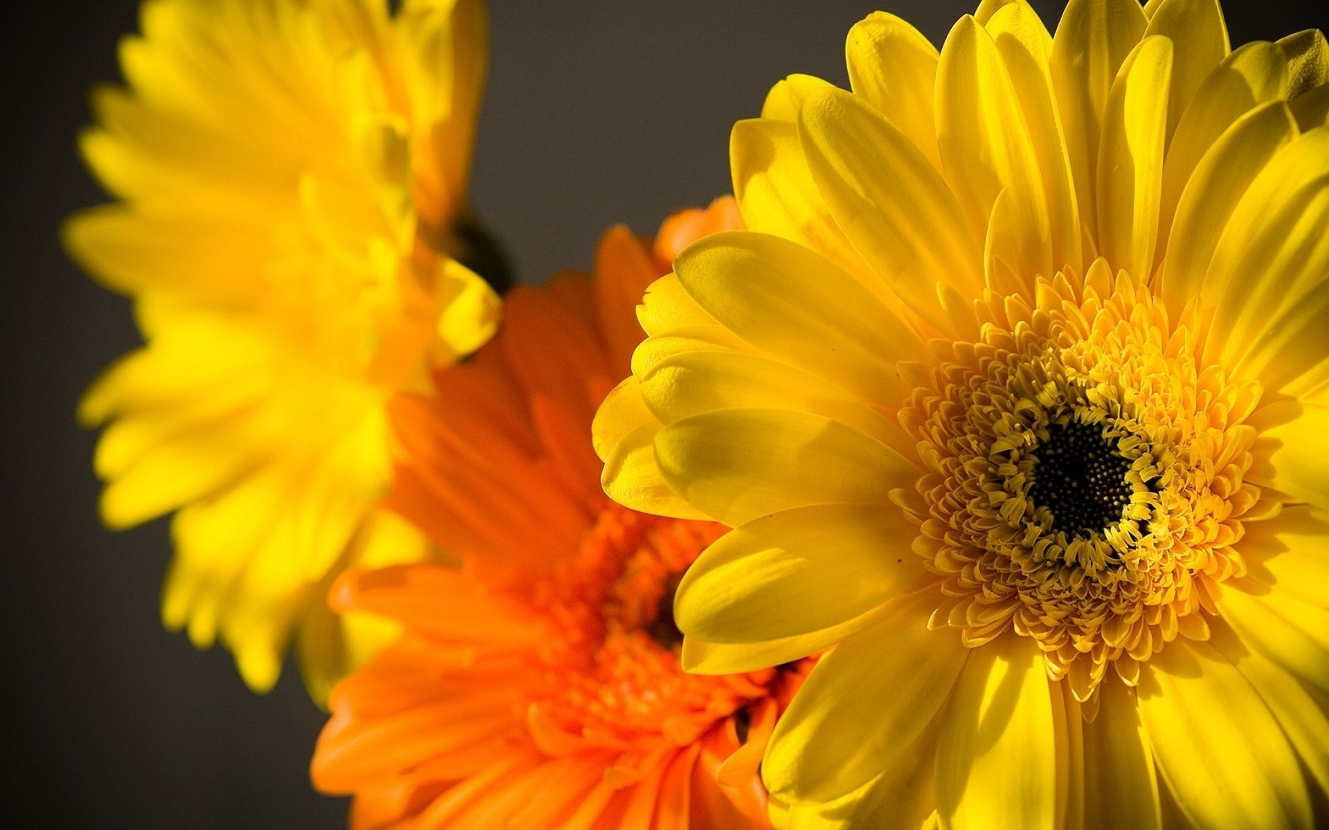 Download wallpaper macro petals yellow flowers resolution