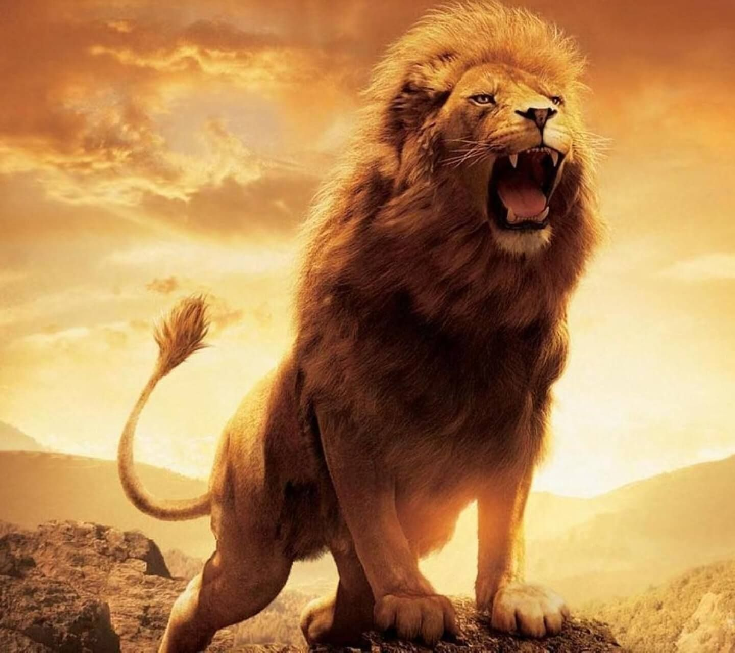 Lion HD Wallpapers Backgrounds Wallpaper 1920×1080 Picture Of A Lion Wallpapers (31 Wallpapers ...
