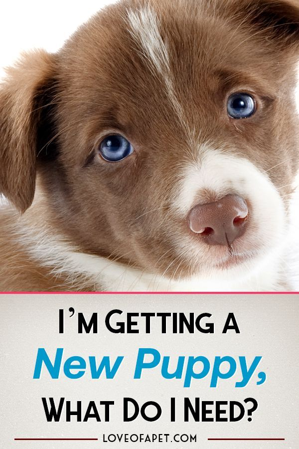 The Ultimate New Puppy Checklist