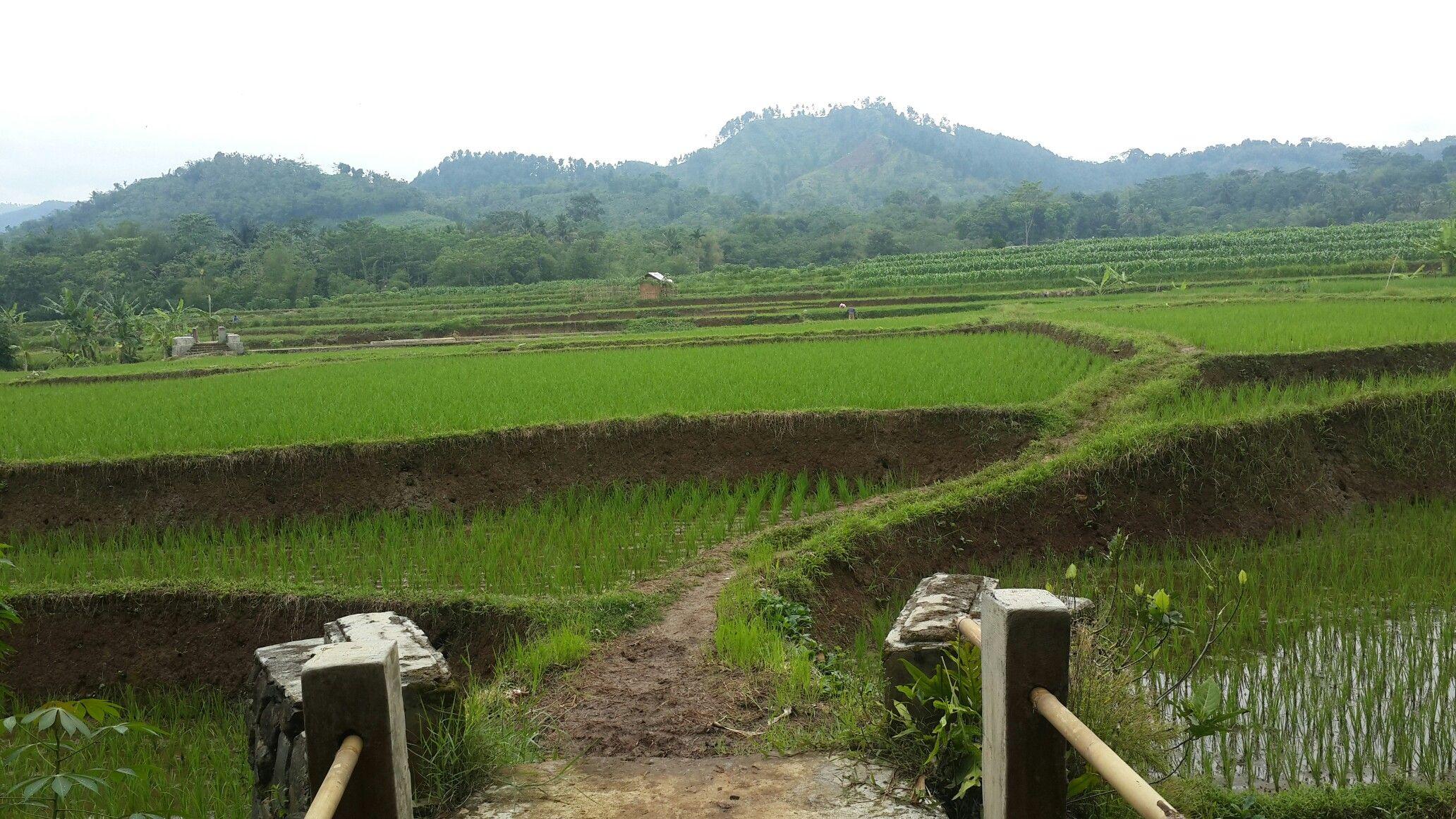 Desa Karangdawa Kecamatan Warungpring Kabupaten Pemalang Jawa Tengah Pedesaan