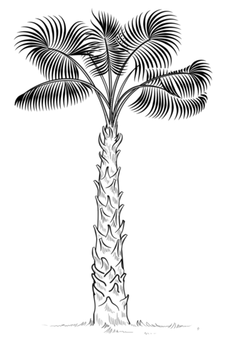 Resultado De Imagen De Dibujo Palmera Palm Tree Drawing Trees Drawing Tutorial Tree Drawing