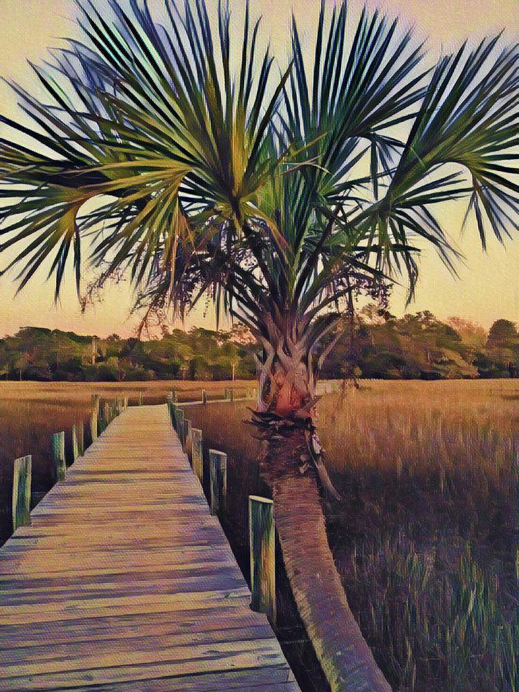 Palm Passage by Sherry Kuhlkin Photo 304251937 / 500px
