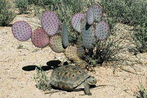 Pin En Mexico Su Flora Y Su Fauna 33