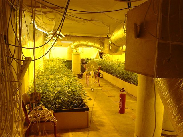Lovely Basement Grow Room