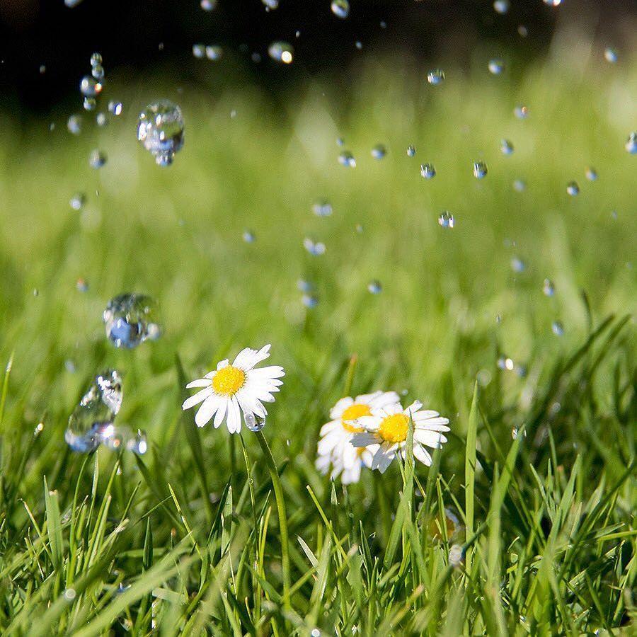 4 Tuintips om optimaal water te geven  Bekijk de link in de bio  #tuintips #mooigroen #water #regen #tips #tuin #tuinontwerp #architect #groen #zomer #zon #warm