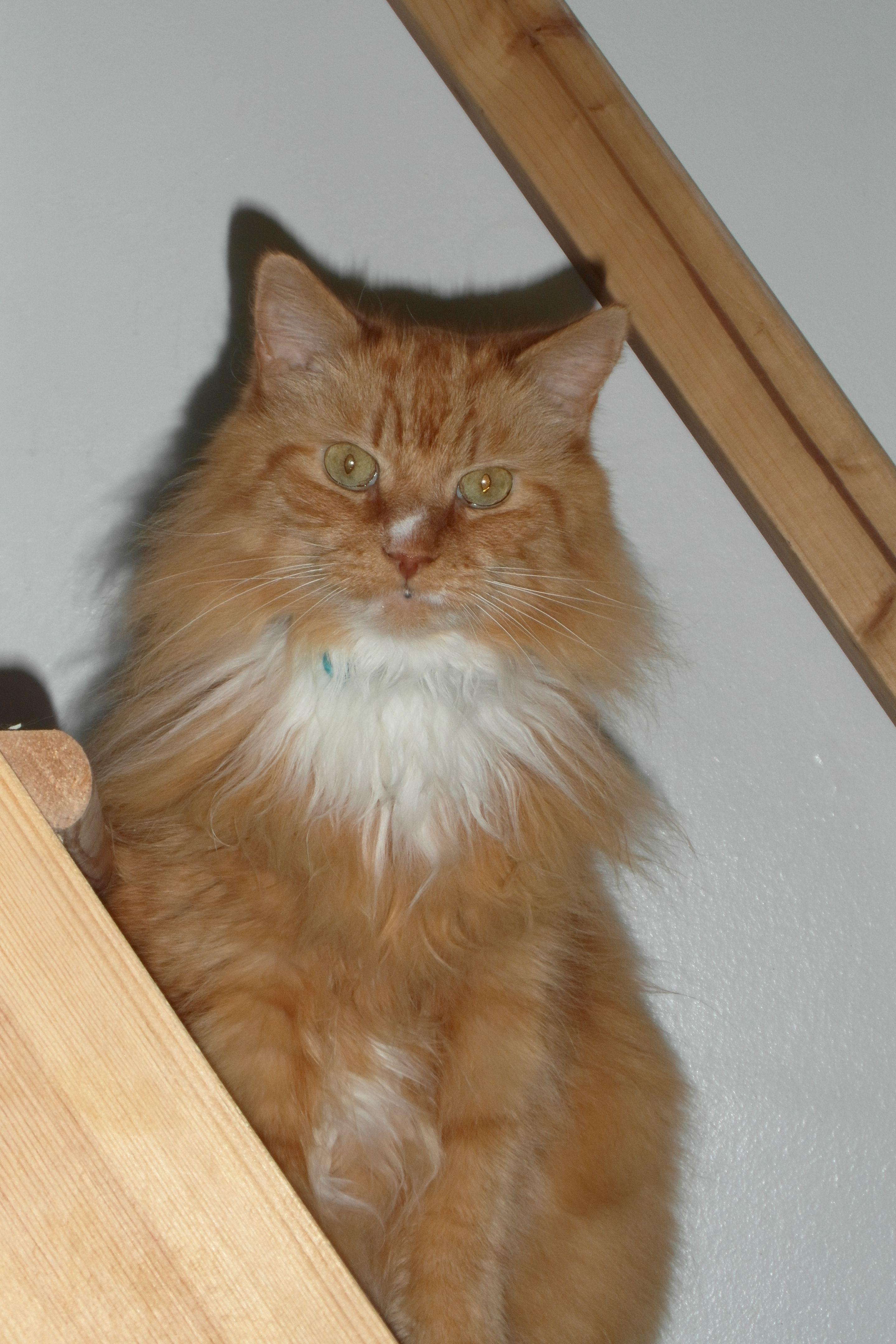 Tali Cat Pawshake