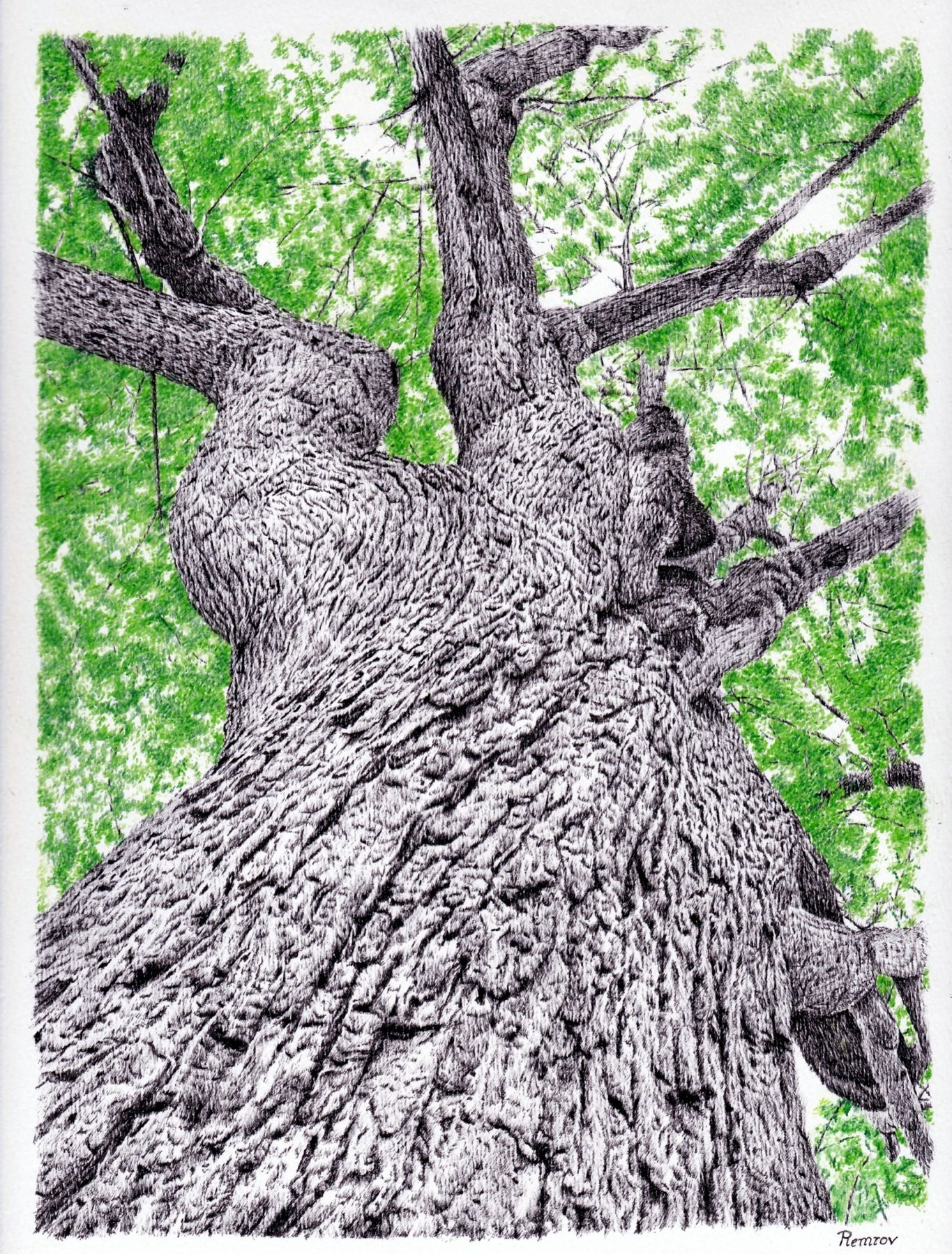 I just finished this tree pen drawing. It was new for me to make the ...