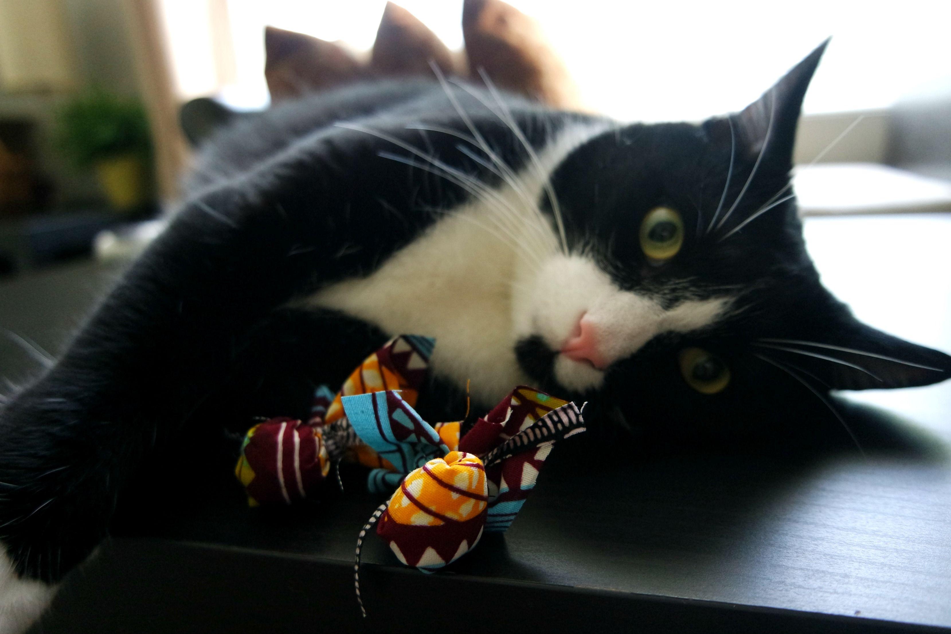 Easy Diy No Sew Catnip Toys Catnip Toys Diy Cat Toys Cat Toys