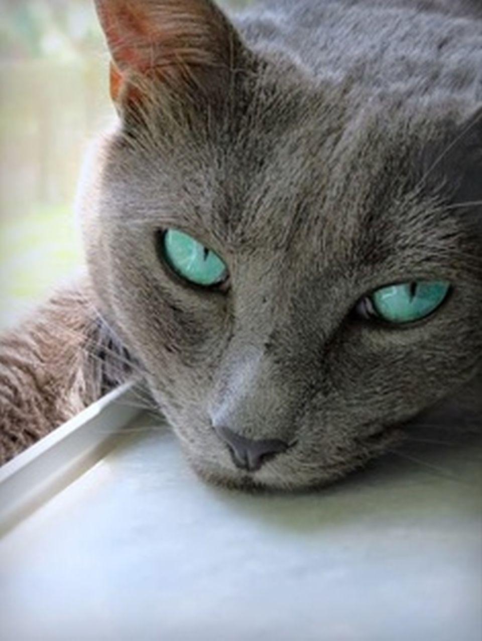 Cat Eye Discharge Cat Eye Discharge Remedy Youtube In 2020 Cat Eye Discharge Cats Cats And Kittens