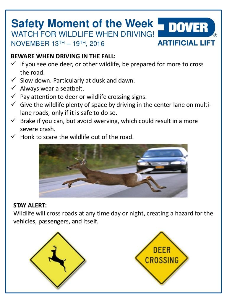 Watch for Wildlife When Driving! Alberta Oil Tool's