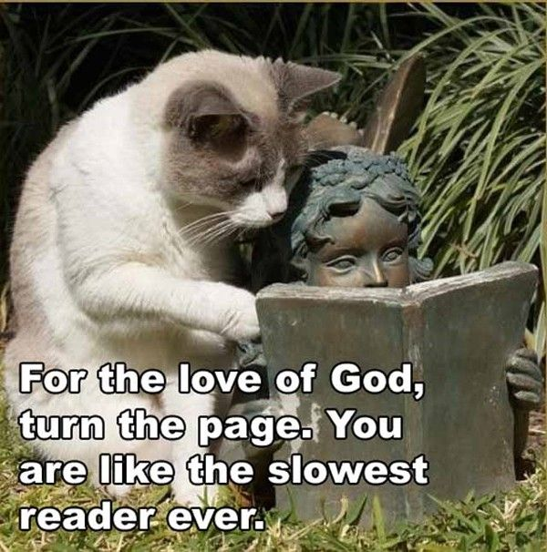 For the Love of God, turn the page. You are like the slowest reader ever. - How Funny