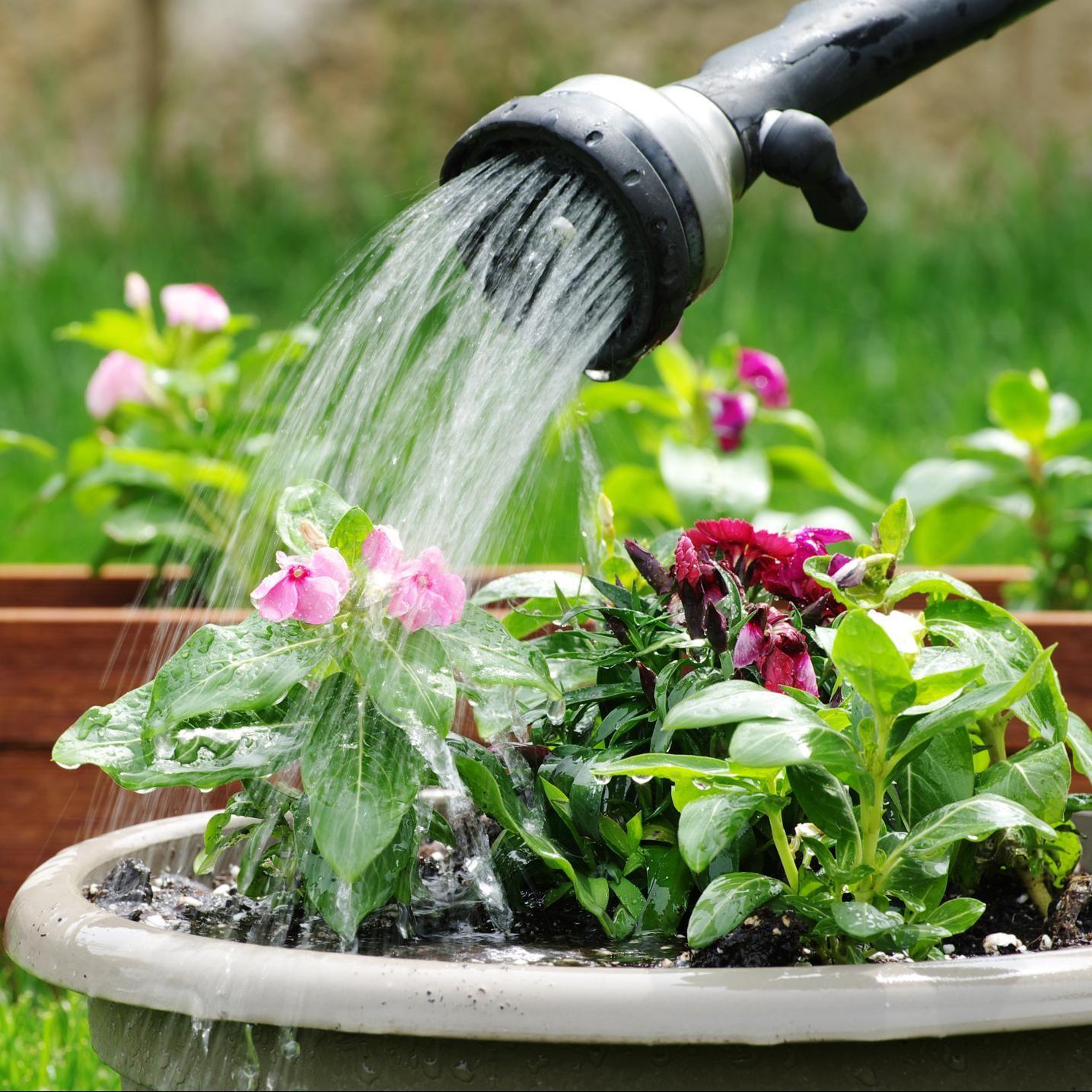 Tudo que você precisa saber para cultivar seu próprio jardim