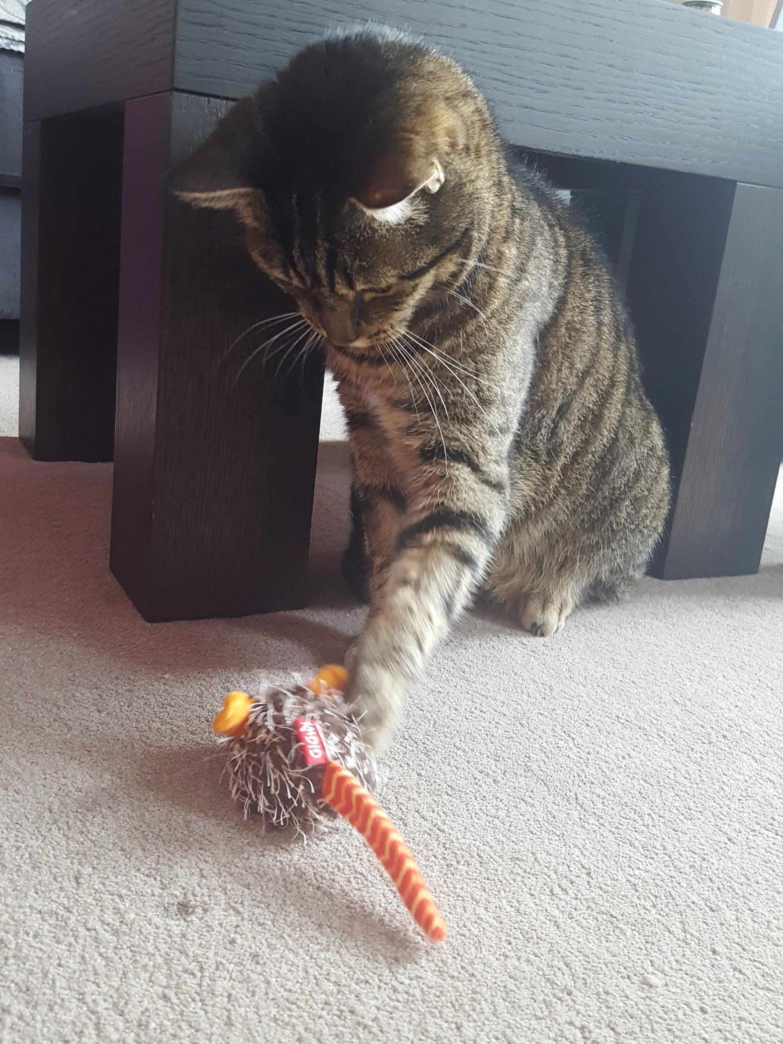 Dirk Playing Cat And Mouse Check This Fantastic Photo From