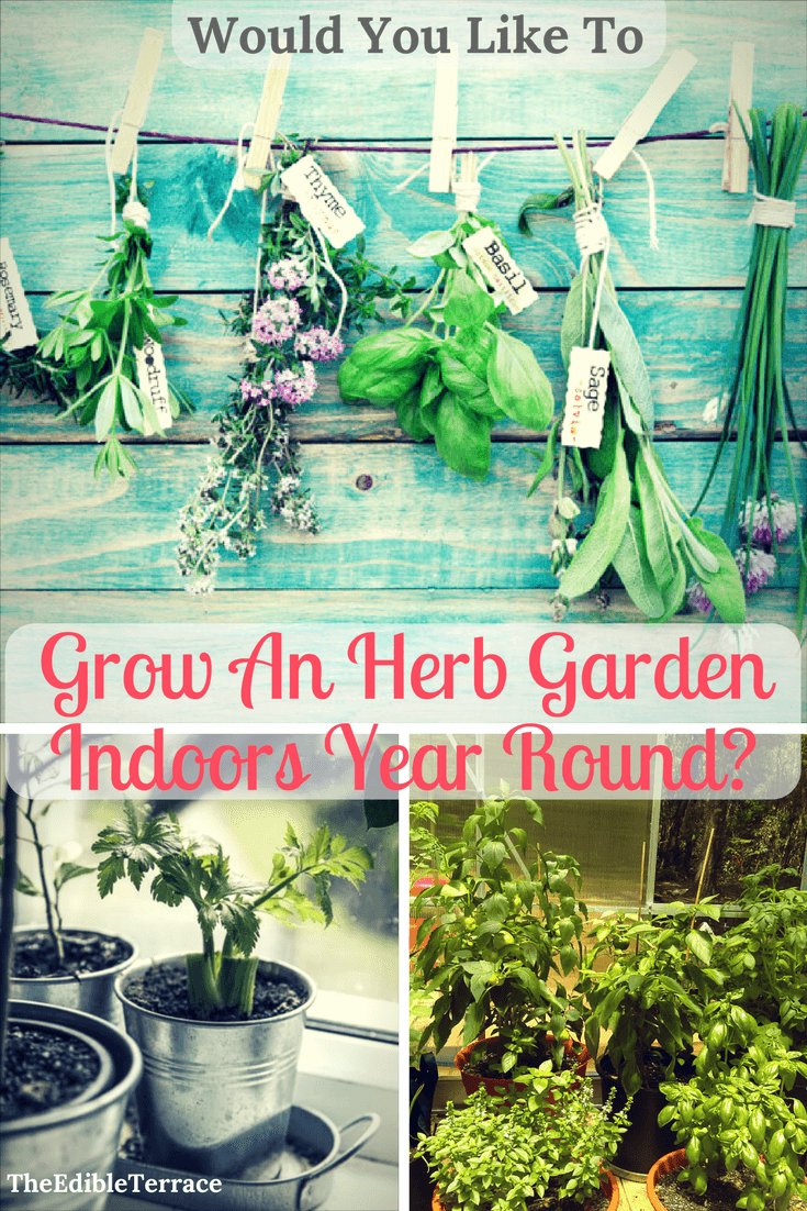 You Can Grow Your Own Herbs Indoors; Whether It Be In Your Apartment Or  From Your Kitchen Window! Grow Them From Seeds Or Seedlings. Plant Them In  Mason ...
