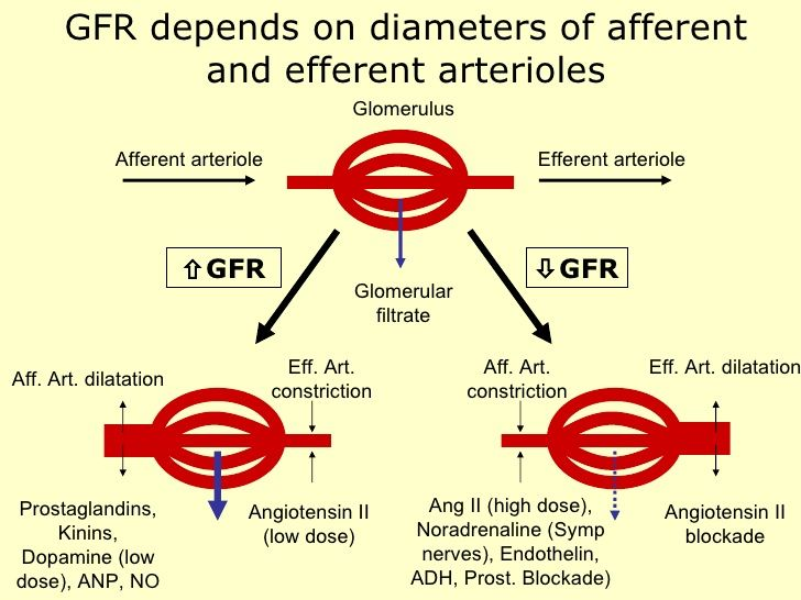 Image result for afferent and efferent arterioles | Cardio ...
