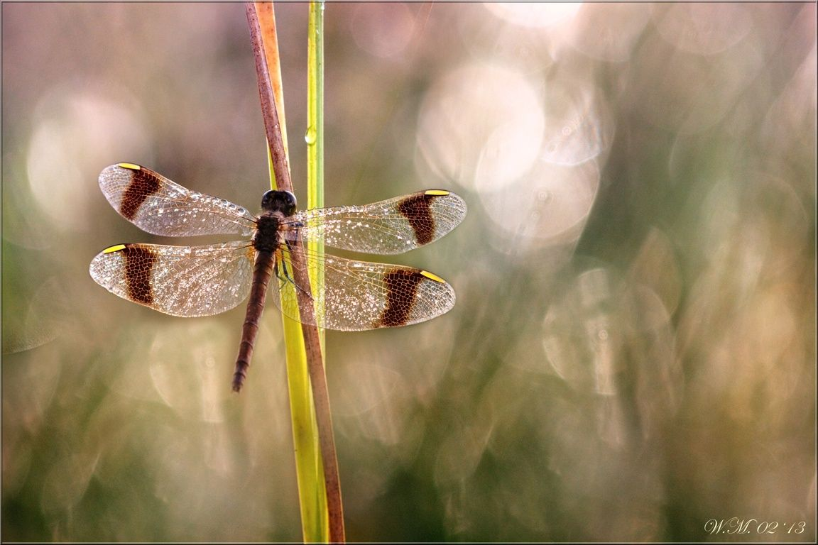 Jewel of nature... by Wil Mijer on 500px