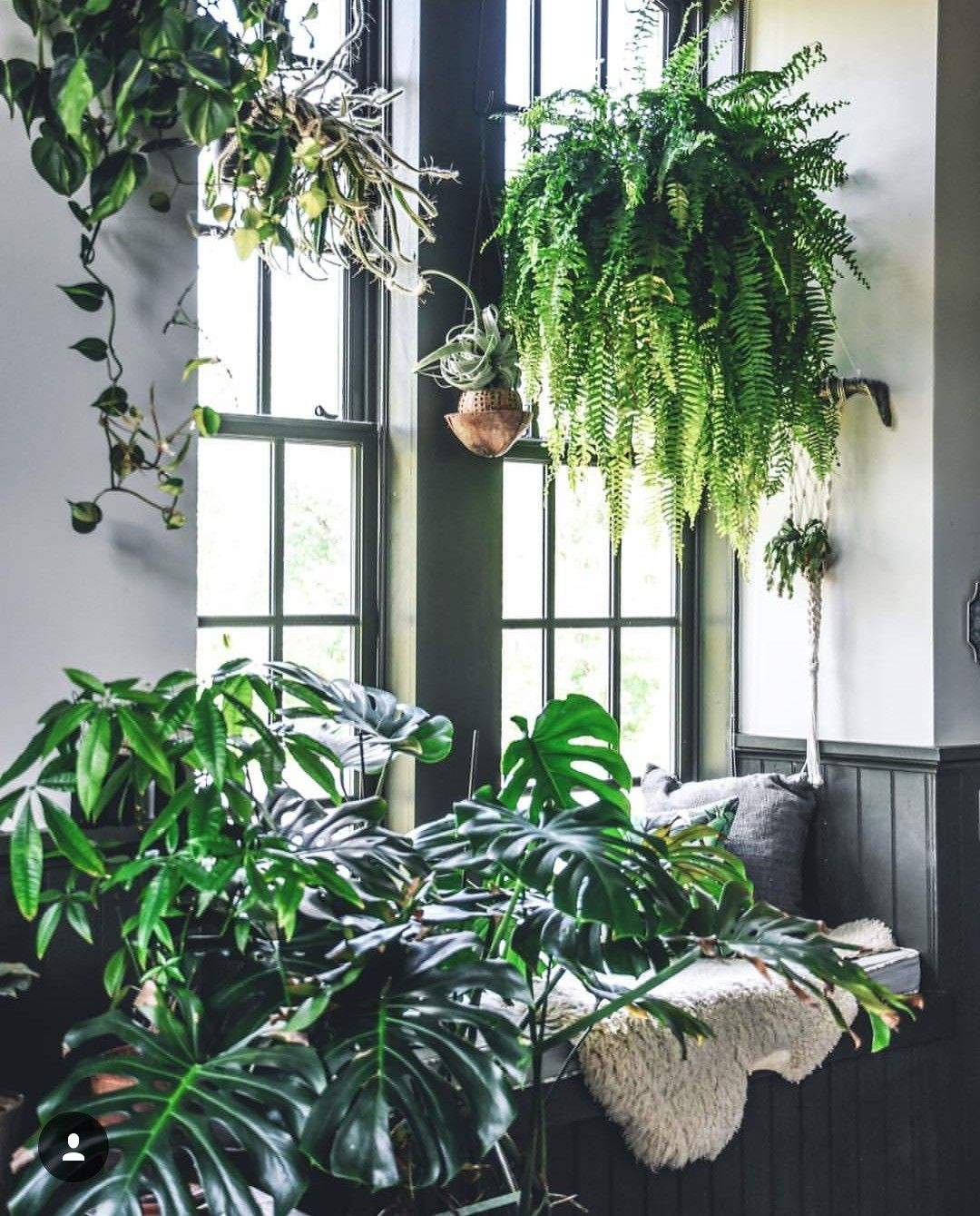 Indoor Apartment Plants: Plants, Indoor Garden