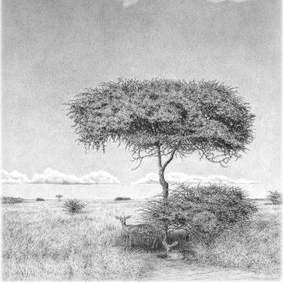 Kalahari couple pencil art