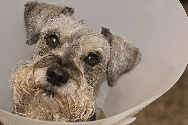 The Cone Of Discontent 12 52 With Images Dog Skin Problem Dogs Pets