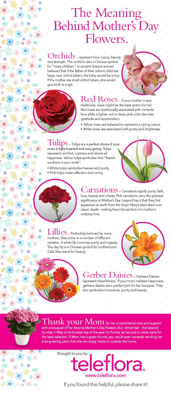 Infographic The Meaning Of Mother S Day Flowers Teleflora Blog Mothers Day Flowers Flower Meanings Meaning Of Mother S Day