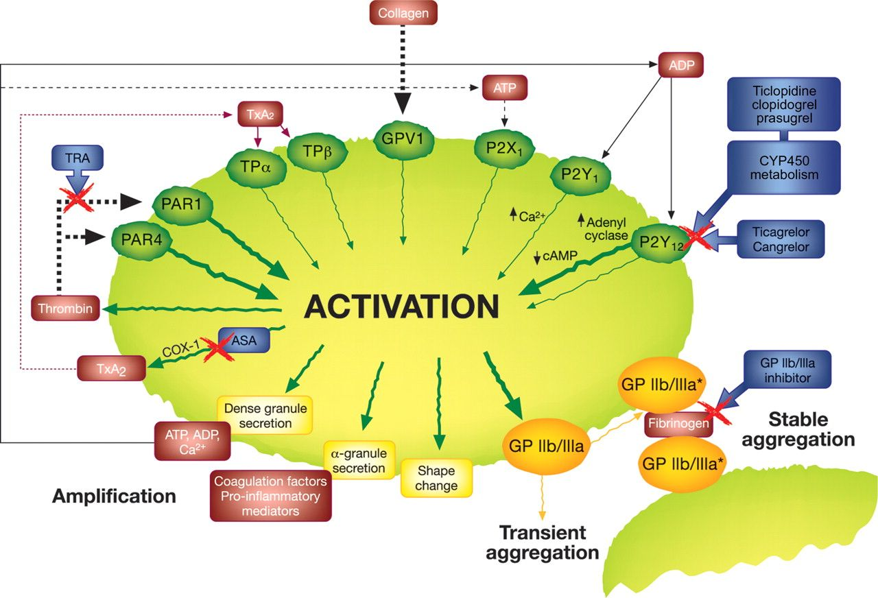 P2y 12 Inhibitors Differences In Properties And Mechanisms Of