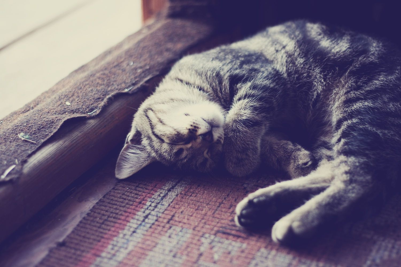 Sleep, sugar II by Daria S. on 500px