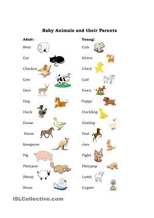 Baby Animals Baby Animal Names Preschool Books Animal Worksheets