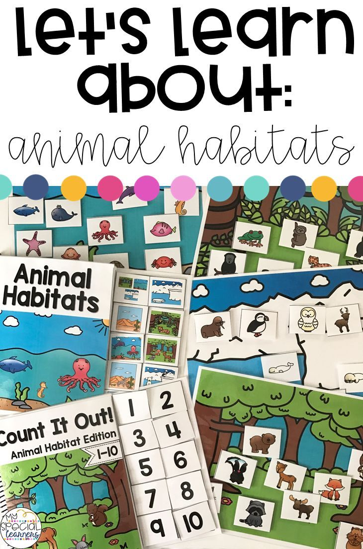 Animal Habitat Activities for Special Education